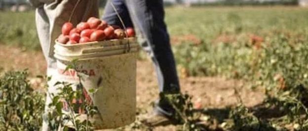IL CONFRONTO TRA L'AGRICOLTURA BIOLOGICA E L'AGRICOLTURA CONVENZIONALE di A. Frascarelli